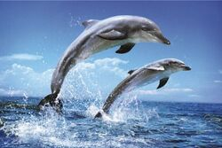 Dolphins-poster-l