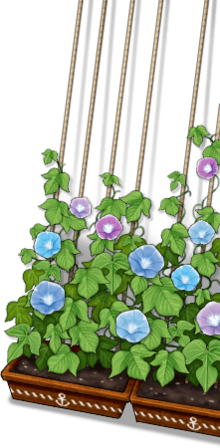 Flowerpot with Morning Glory that's being grown by the Ship Girls