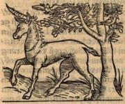 Sebastian Münster Cosmographia unicorn