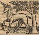 African unicorn