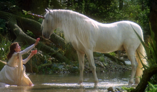Image of Unicorn (equine)