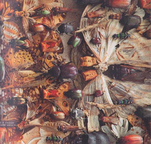File:West Ryder Pauper Lunatic Asylum CDDVD Album (PARADISE58) - 15.jpg