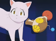 Neko and the animal turner gun