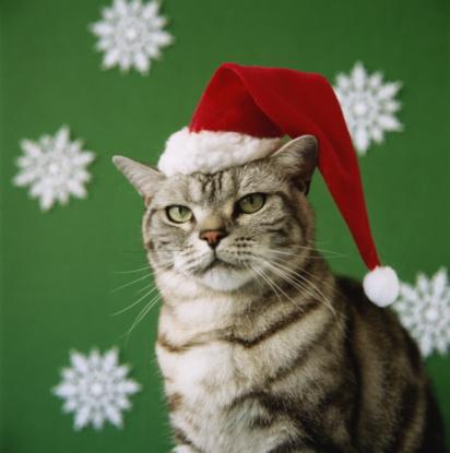 File:Cats-in-santa-hats-12102010-01.jpg