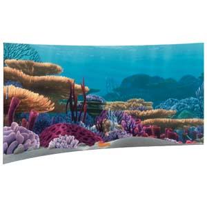 Finding Nemo Reef