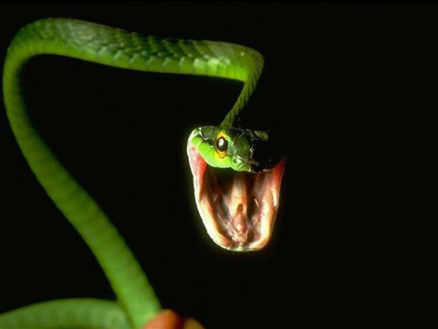 File:Snake 4.jpg