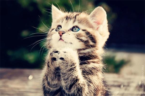 File:Kittykat.jpg