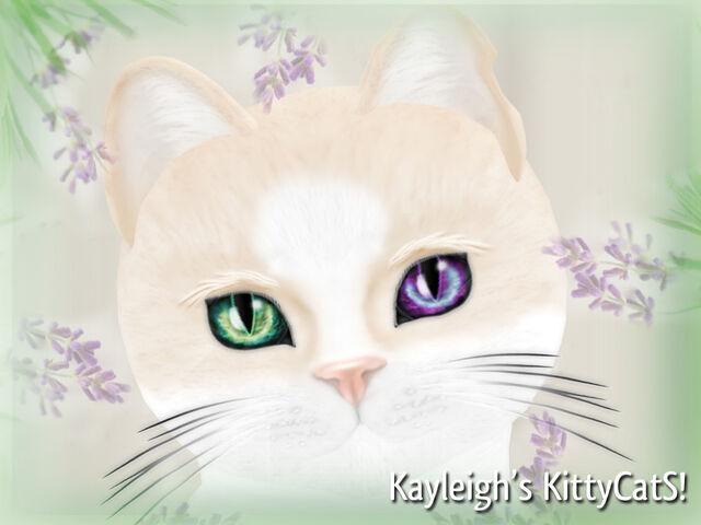 File:Kayleigh's KittyCatS 1024 x 768PX2.jpg