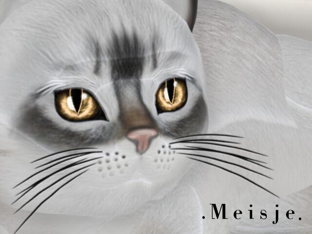 File:KittyCatS - Meisje.jpg