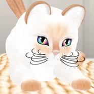 KittyCatS! - Philippine