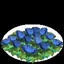 Tulip flower bed blue last