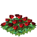 Tulip flower bed red last