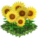 File:Sunflower flower bed last.png