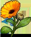 File:Grass calendula.png