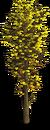 Tree-Autumn sapling