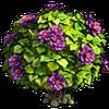 Res mint bush 1
