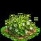 Pepper plant ph2