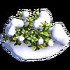 Res goosefoot snowy 1