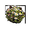 Resource-Daisies