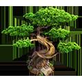 Res bonsai 3.png