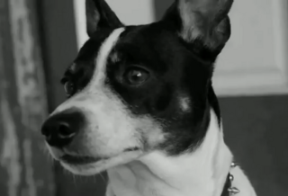 Robert's dog