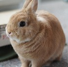 File:Cute-rabbit copy.jpg