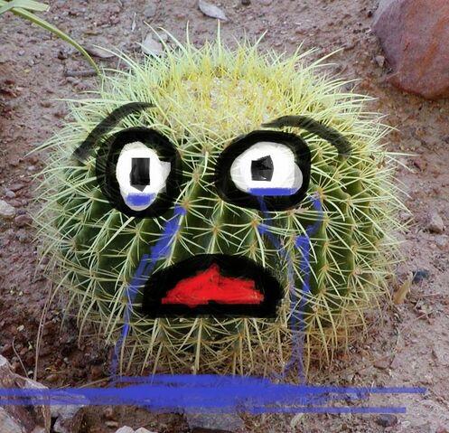 File:Sad cactus.jpg