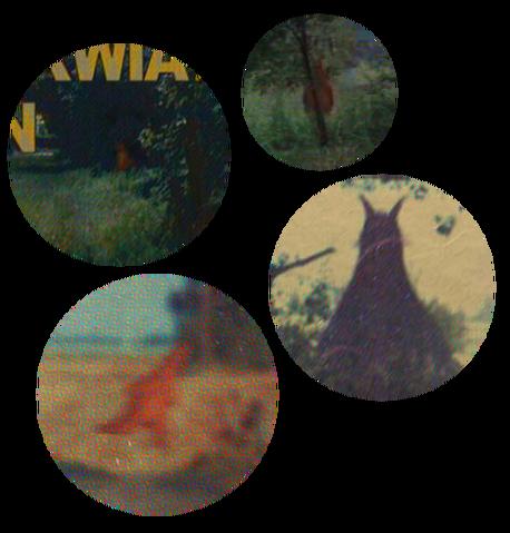 File:Dktv hidden maggies.png