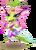 OrchidMantisAdult