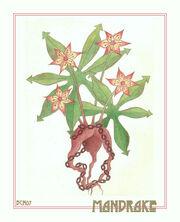 Mandrake Marque by elegaer