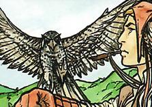 File:Hawk.jpg