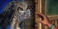 Old Man's Owl