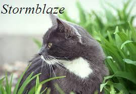 Stormblaze