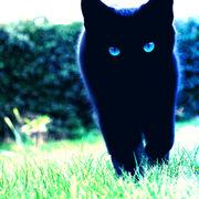 Blue eyes 3 by planet37-d3h6l49
