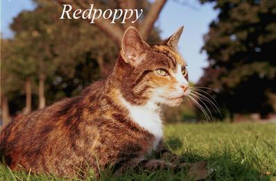 Redpoppy
