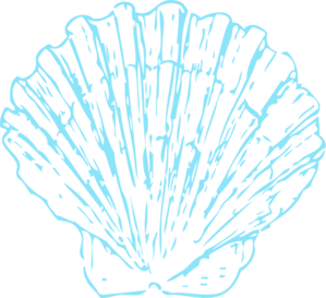 File:Turquoise-sea-shell-clipart-1.jpg.png