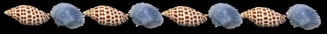 File:Junonia-blue-shells.png