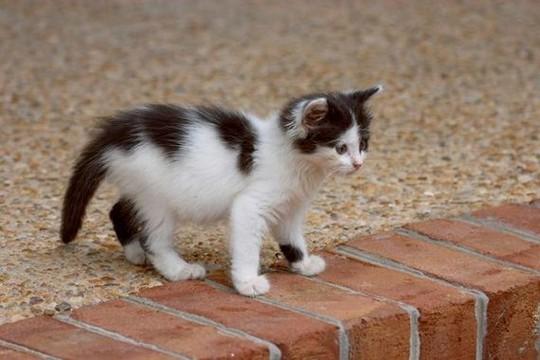 File:Kittens33.jpg