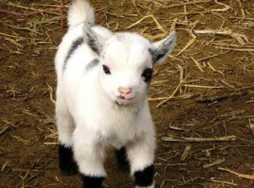 3133ff447d39045c7766a2a07e8d36b6--cutest-babies-adorable-babies
