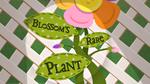 Blossom's Rare Plant title card