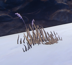 Desert Grass prop placed
