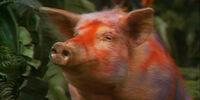 Altrusian Pig
