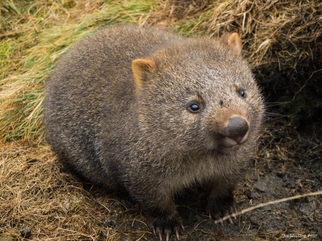 File:Cradle-Mountain-Land-of-the-Wombats-4.jpg