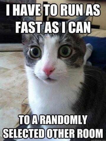 File:Hypercat.jpg