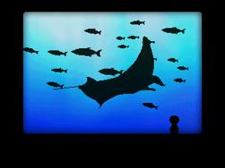 Aquarium Orb room 3
