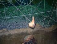The Pendant of Kamehameha
