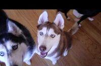 Laika says igloo