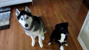 Mishka and moki