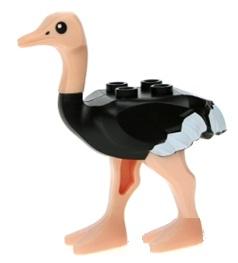 File:Ostrichbetter.jpg
