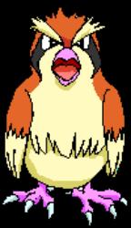 016 Pidgey OS2
